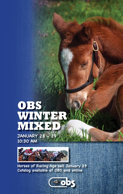 2015 Winter Mixed Sale