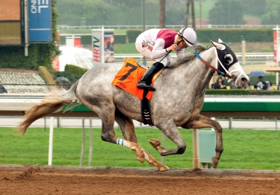 Richard C. Pell's Calculator and jockey Elvis Trujillo win the Grade III $100,000 Sham Stakes Saturday, January 10 2015 at Santa Anita Park, Arcadia, CA ©Benoit Photo