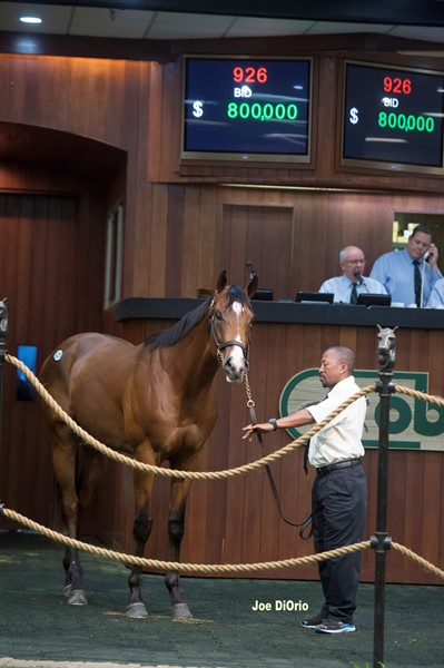 Hip926 City Zip-Successful Sarh sold $800,   000 - @ OBS in Ocala June 17 2016