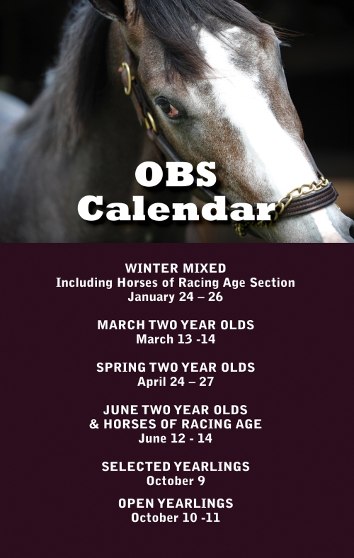 OBS Sales  Premier Thoroughbred sales venue in Ocala Florida