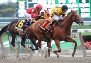 Vexor Nashua Stakes