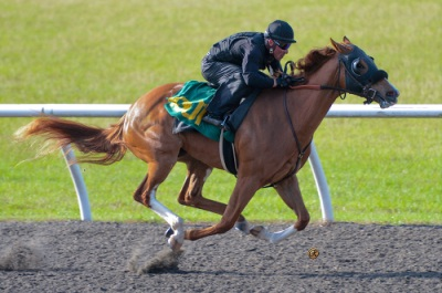 OBS April 2yos 2013 Breeze show Thur