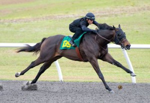 OBS March 2yos 2014 Friday Breeze Show hip 139 by Midshipman