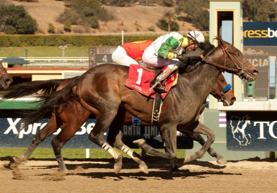 Wild Dude and Rafael Bejarano, outside, nail favored Secret Circle and Martin Garcia at the wire to win the Grade II $200,000 Palos Verdes Stakes Sunday, February 2, 2014 at Santa Anita Park, Arcadia, CA. ©Benoit Photo
